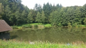 Michelsee