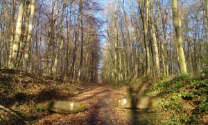 Wanderweg auf dem Hollmuth