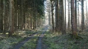 Im Wald bei Wiesenbach